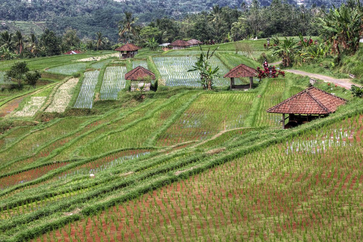 paesaggi-indonesia_002_SP