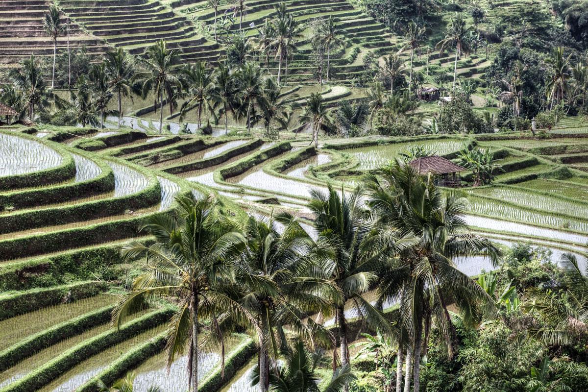 paesaggi-indonesia_004_SP