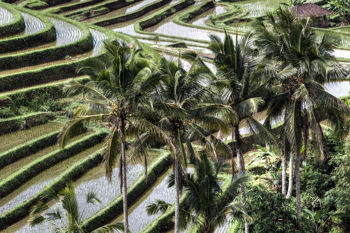 paesaggi-indonesia_006_SP