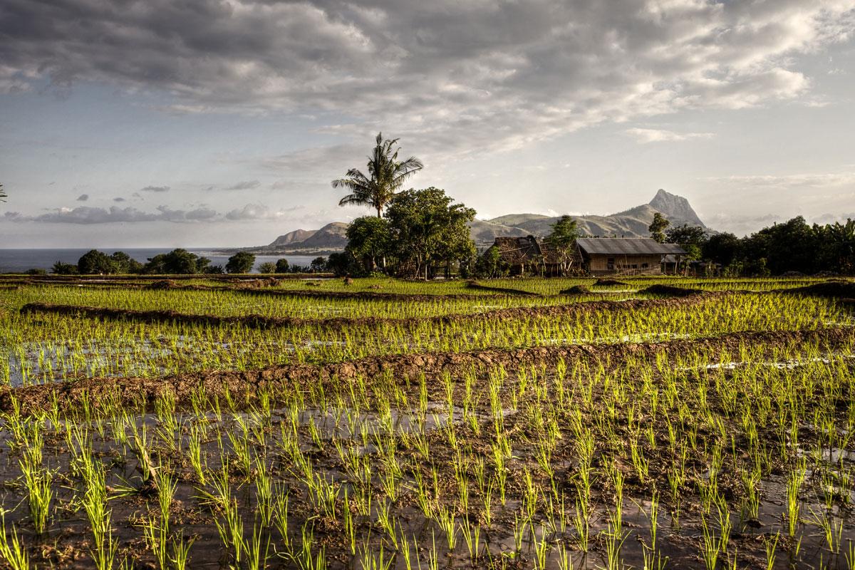 paesaggi-indonesia_013_SP