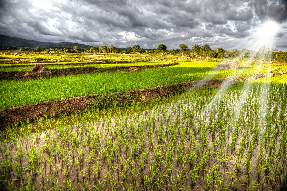 paesaggi-indonesia_017_SP
