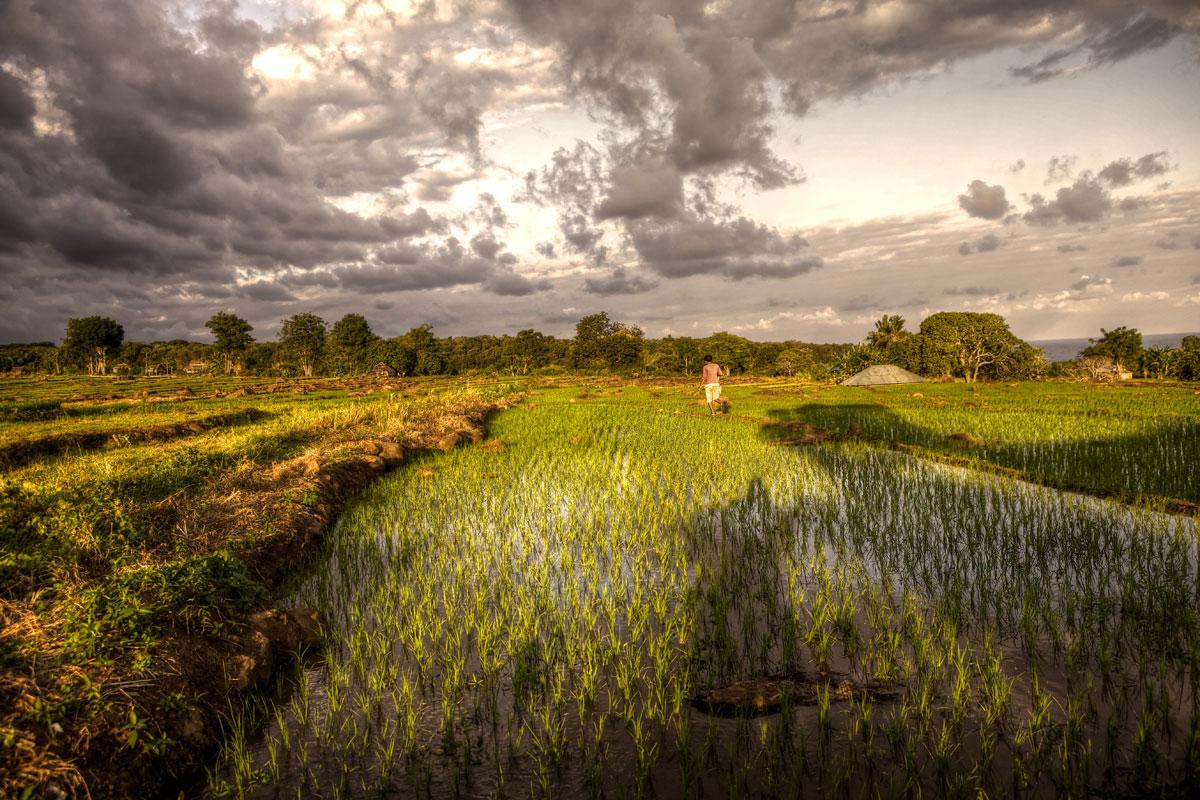 paesaggi-indonesia_018_SP