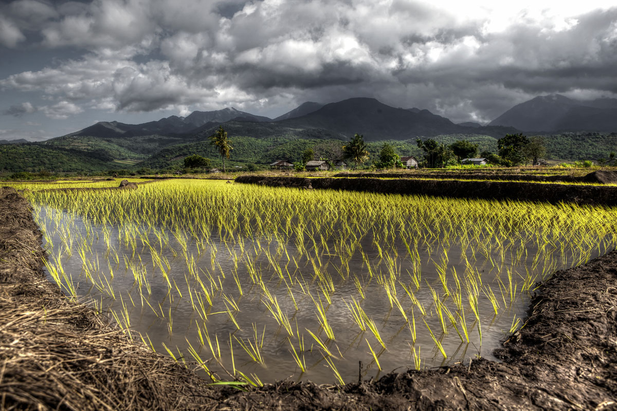 paesaggi-indonesia_020_SP