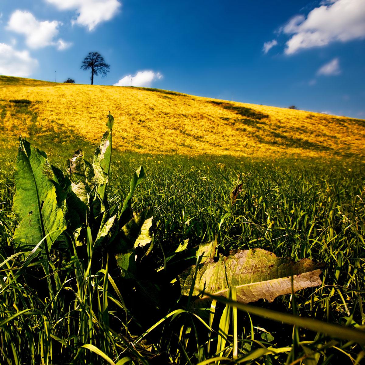 paesaggi-italia_033_SP