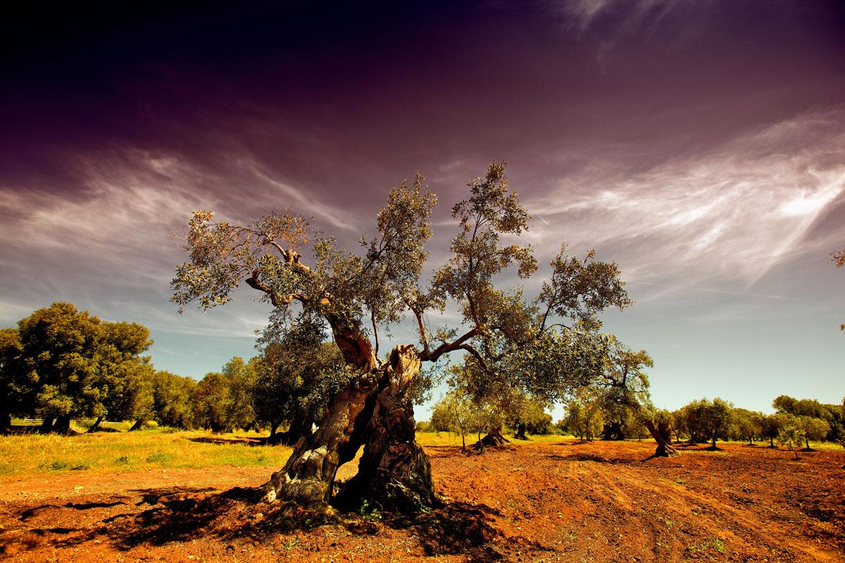 paesaggi-italia_042_SP