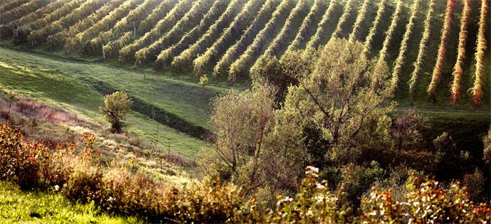 paesaggi-italia_075_SP