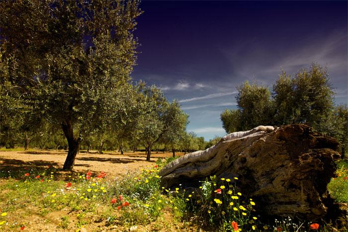 paesaggi-italia_082_SP