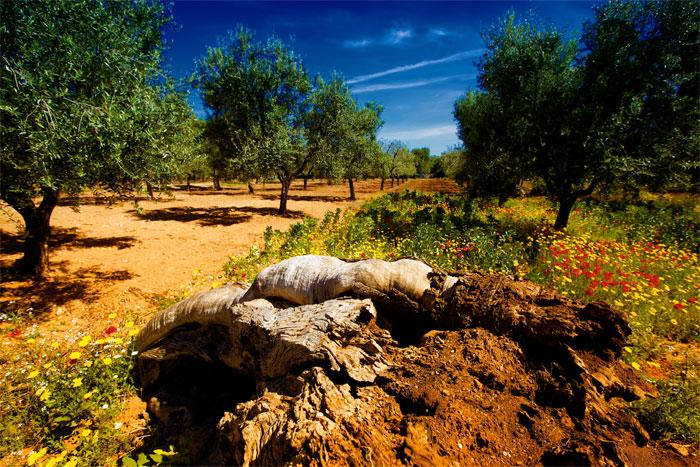 paesaggi-italia_083_SP