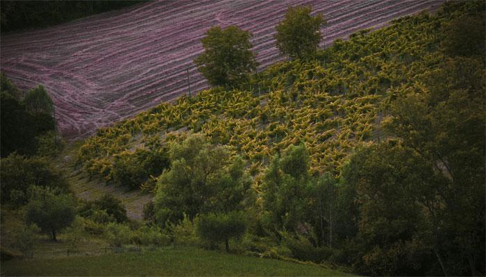 paesaggi-italia_114_SP