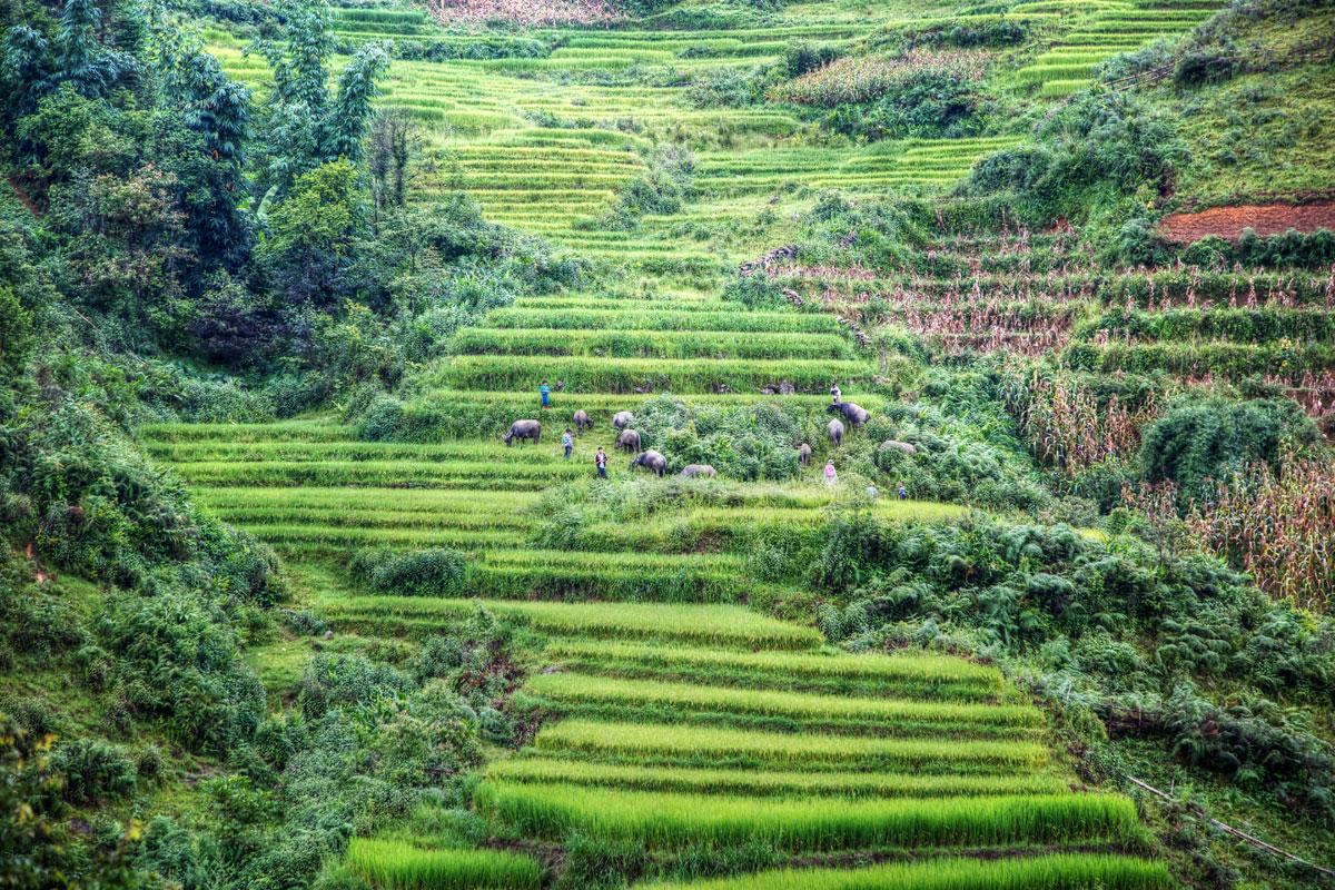 paesaggi-vietnam_013_SP