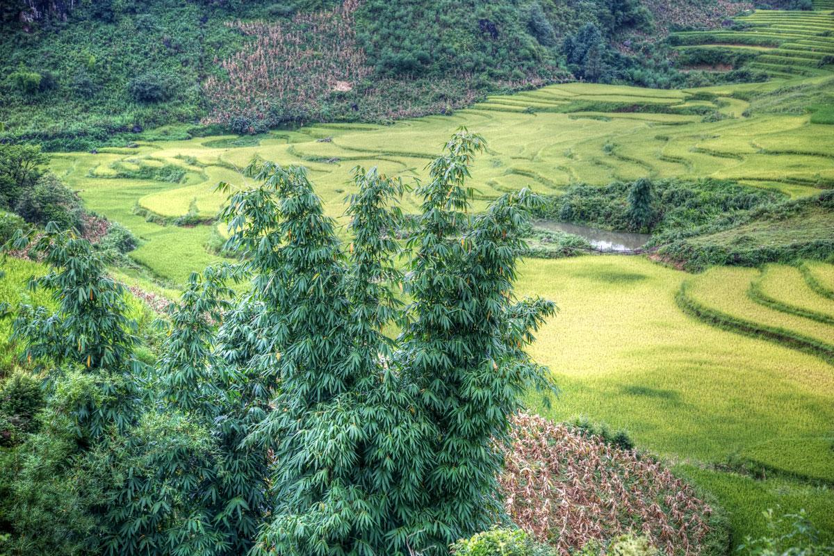 paesaggi-vietnam_015_SP
