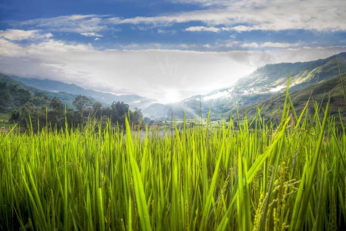 paesaggi-vietnam_022_SP